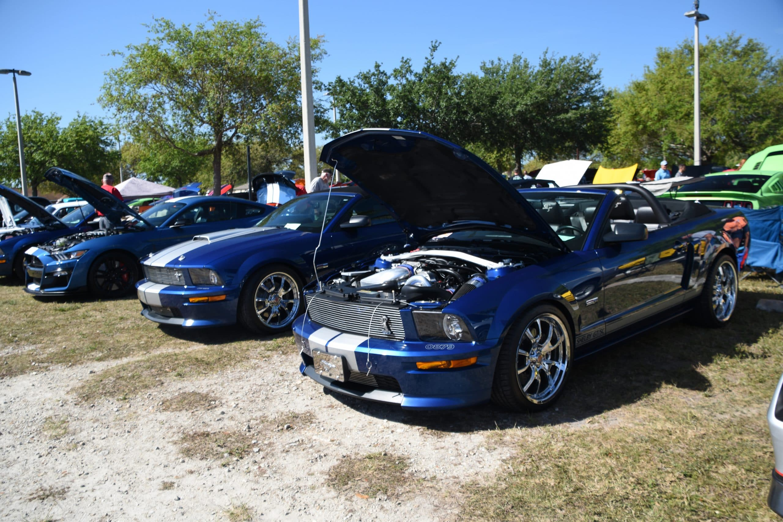 Two blue Shelby GT 350's