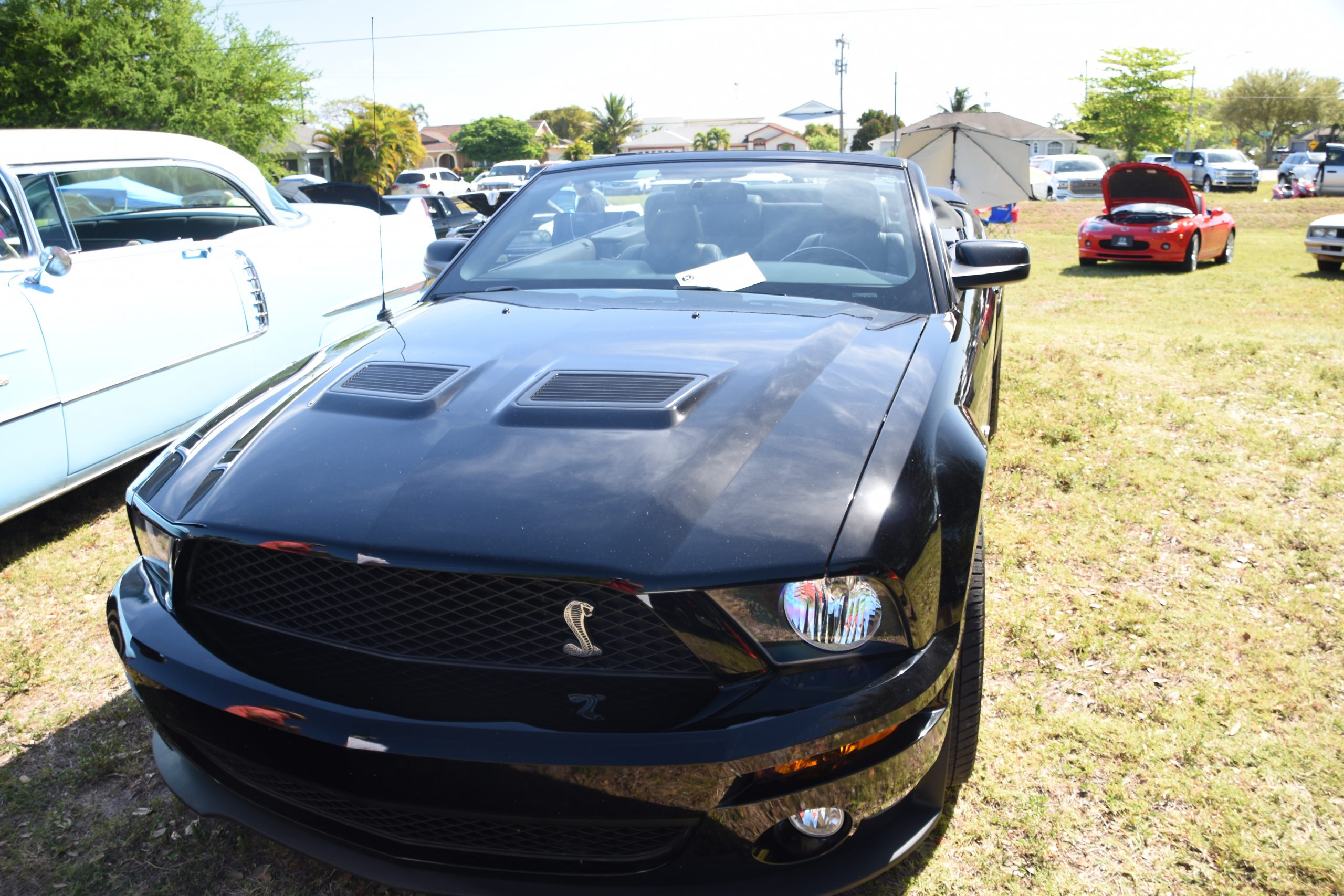 Black Mustang Shelby GT