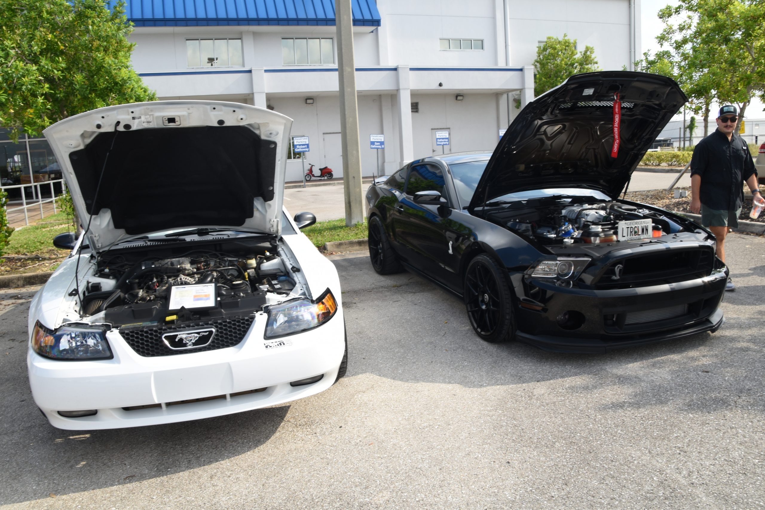 White and black Mustangs with hoods up