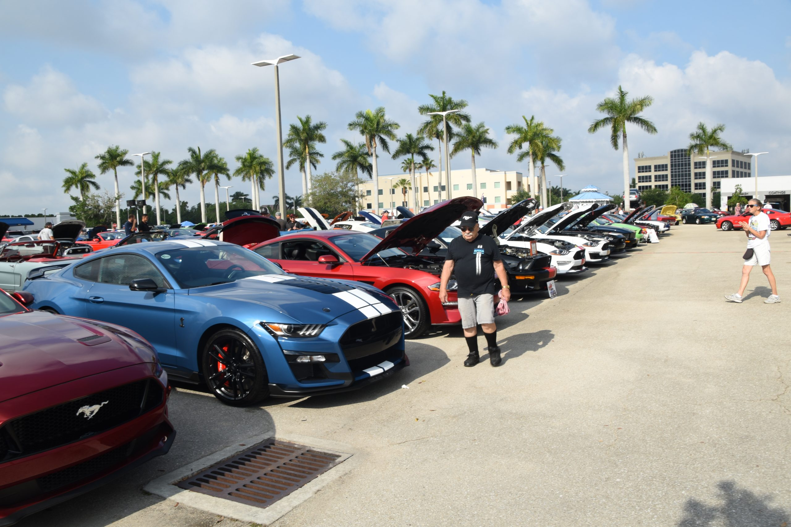 Row of Mustangs with hoods up