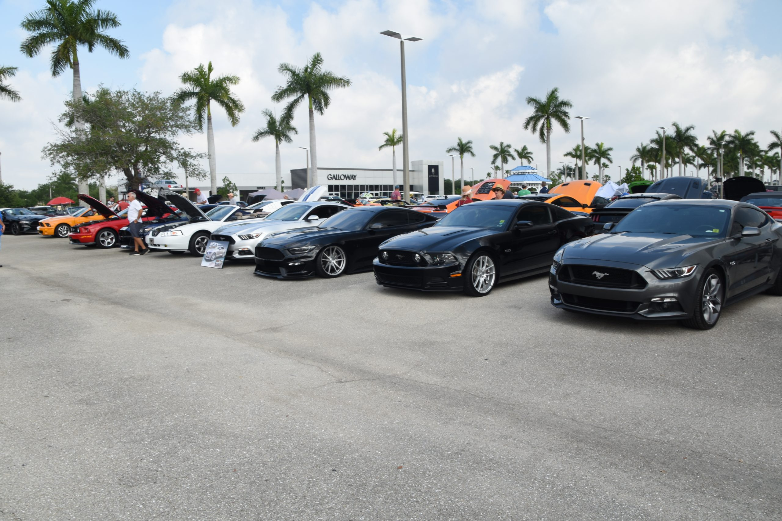 Row of Mustangs with hoods down