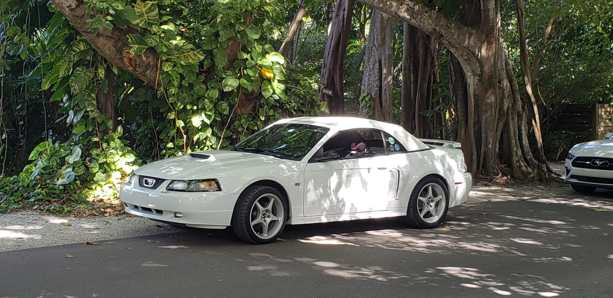 Mark & Linda Wilson's 2002 white Mustang Convertible